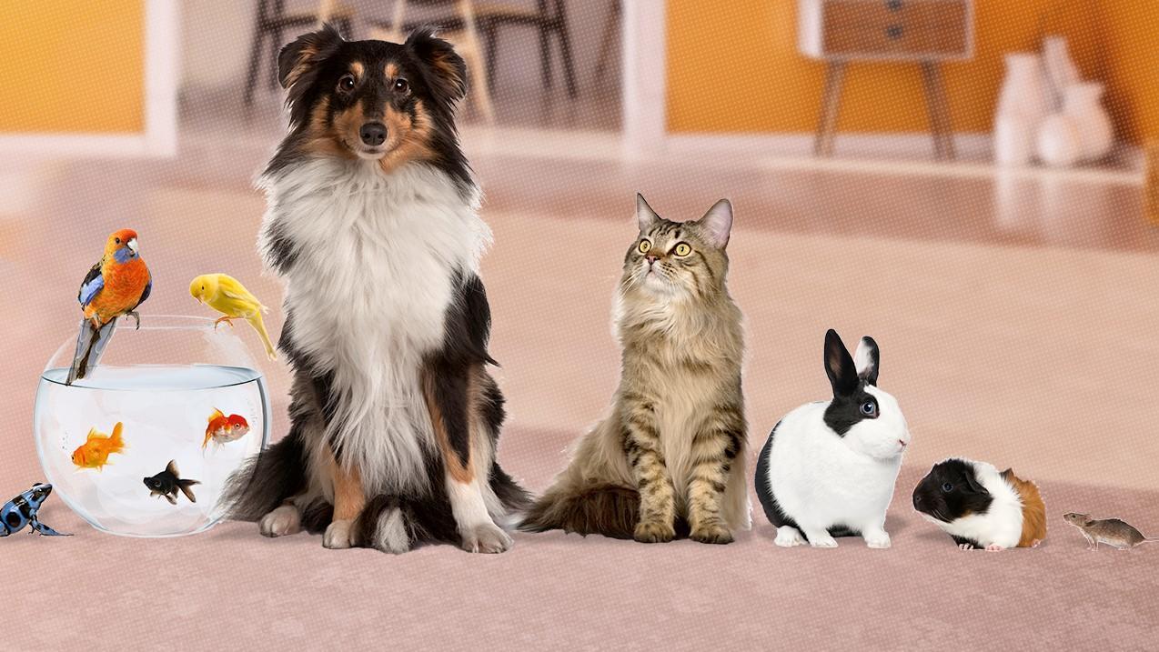 Haustiere können treue Begleiter werden - aber in der Regel nichts zur Miete beitragen