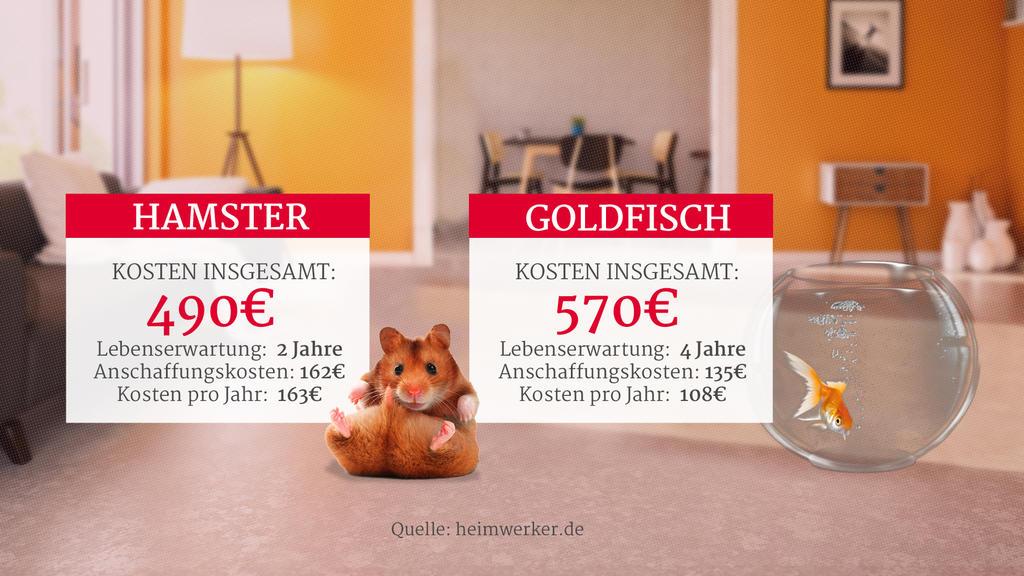 Grafik: Kosten für Hamster und Goldfisch als Haustiere