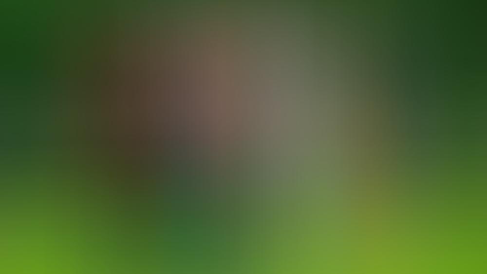 König Willem-Alexander mit seinen drei Töchtern und Ehefrau Máxima.