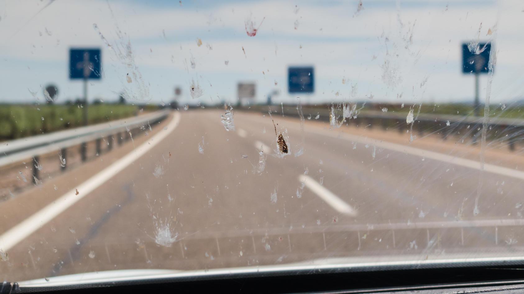 Tote Insekten auf der Autoscheibe: Sieht unschön aus und lässt sich nur schwer entfernen.