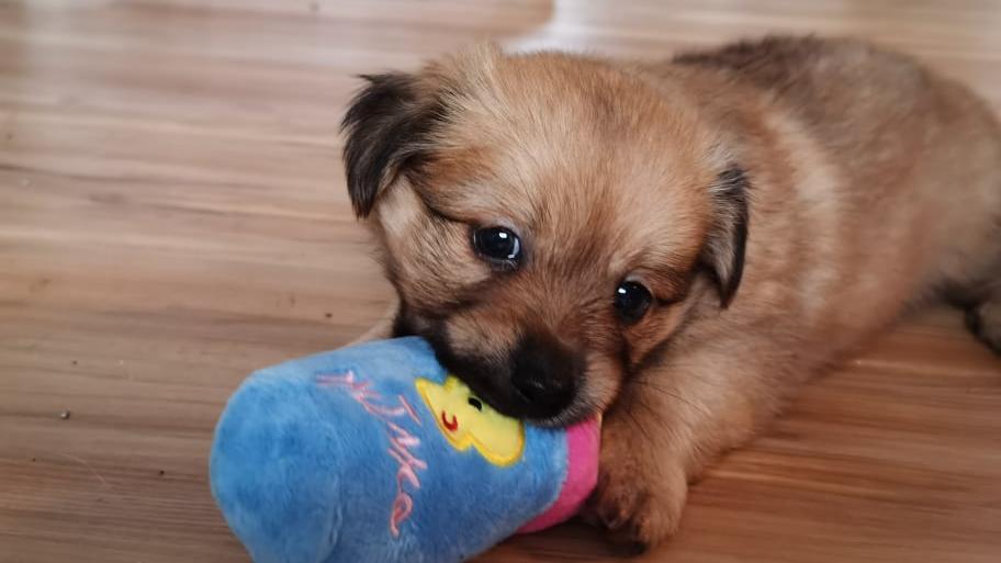 Poldi ist ein sehr verspielter und aufgeweckter Hund.