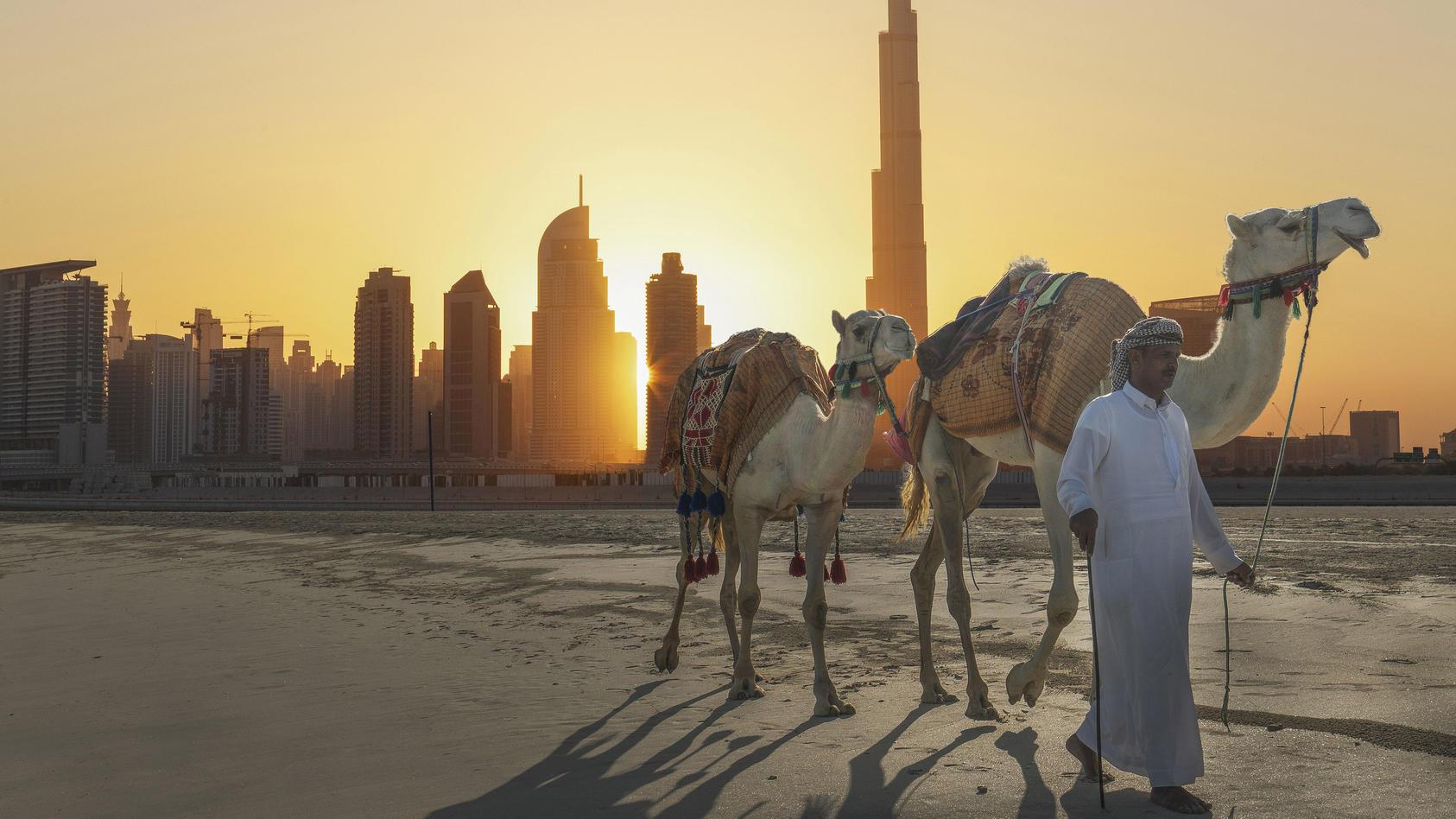 Ein Mann läuft mit seinen Dromedaren Richtung Wüste in der Nähe der Stadt Dubai. Im Hintergrund steht der Burj Al-Khalifa.