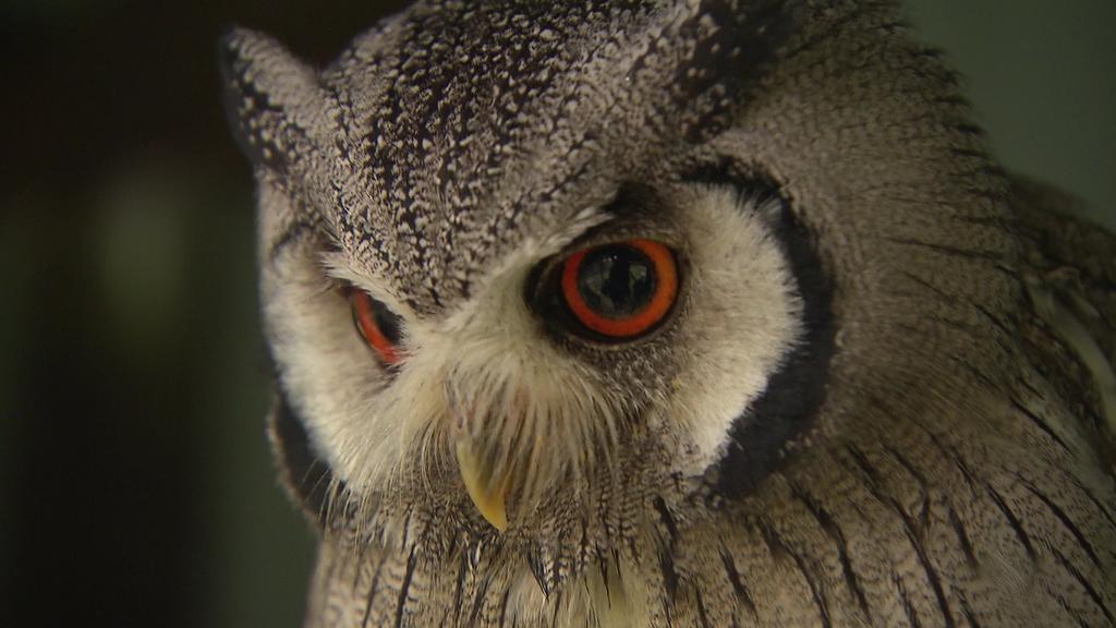 Hier lernt man viel Neues über unterschiedliche Vogelarten.