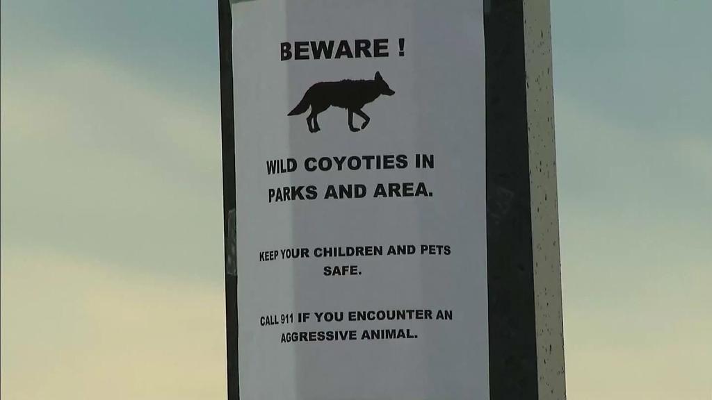 Lily und ihre Hündin Macy wurden von Kojoten angegriffen.
