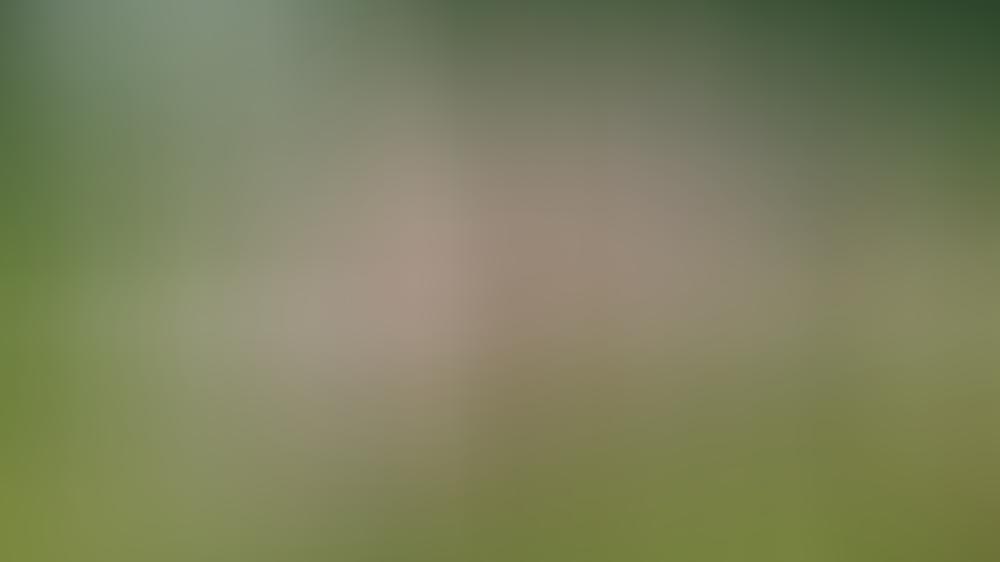 König Carl XVI. Gustaf (Mitte) freut sich über das Wiedersehen mit seiner ganzen Familie.