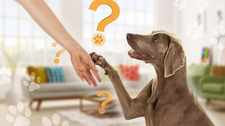 Was bedeutet die Geste? - Wenn Ihr Hund seine Pfote auf Sie legt