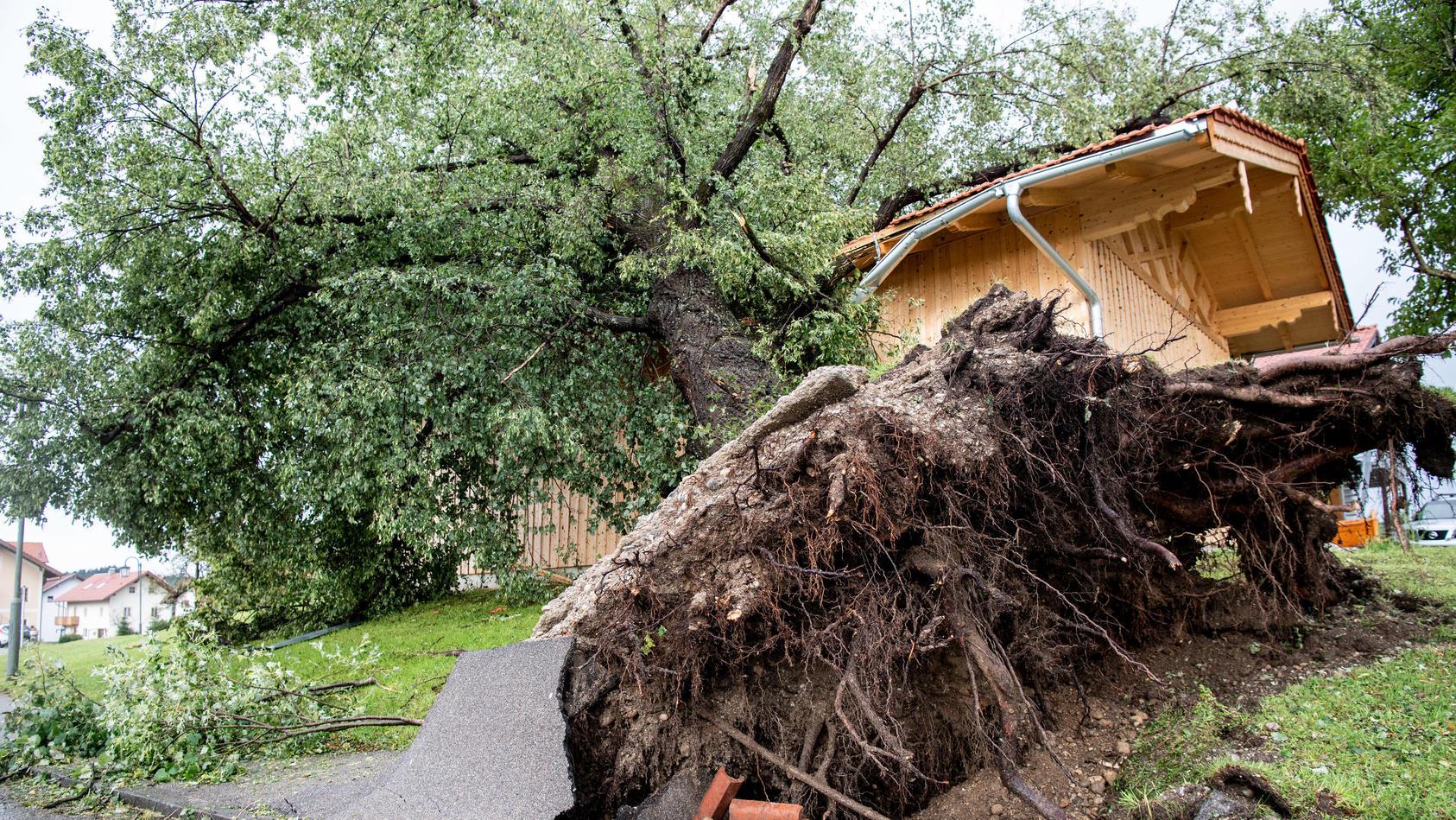 Die Wurzel eines umgestürzten Baumes hat Teile eines Radwegs in Halfing herausgebrochen.