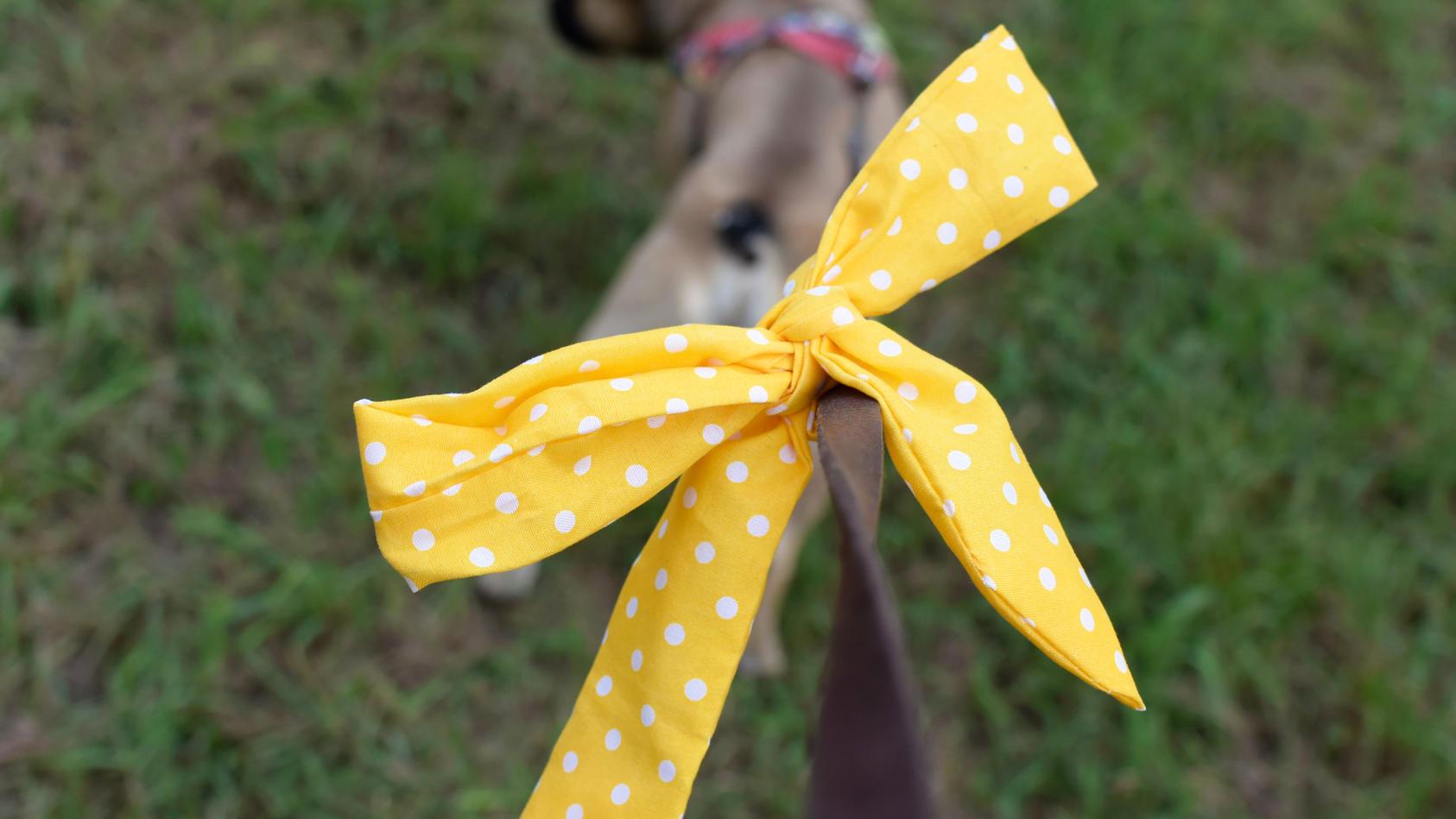 """Eine gelbe Schleife am Halsband oder an der Hundeleine bedeutet: """"Mein Hund brauch Abstand!"""""""