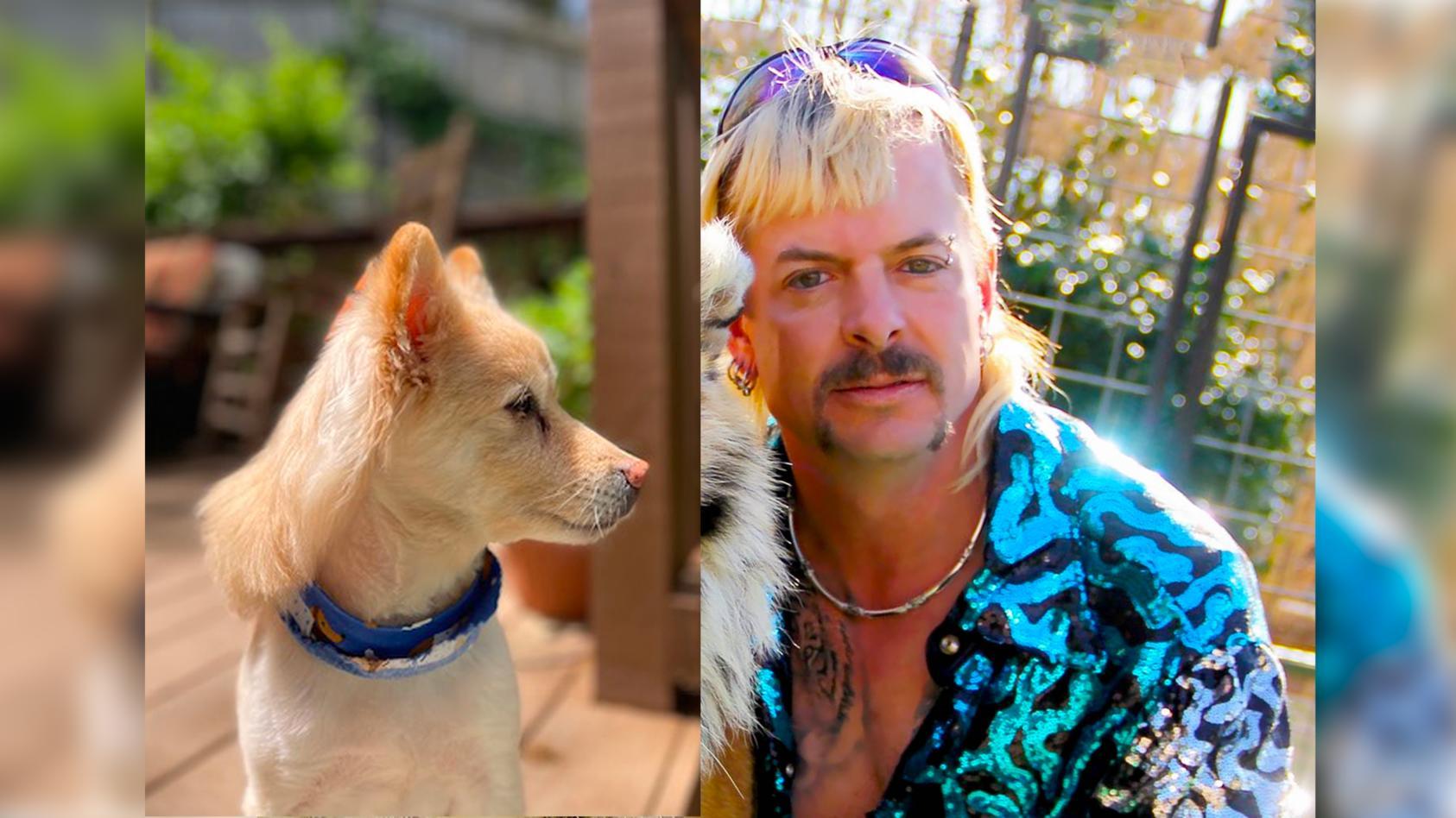 Das Haarstyling-Vorbild des Hundes scheint wohl Joe Exotic gewesen zu sein!
