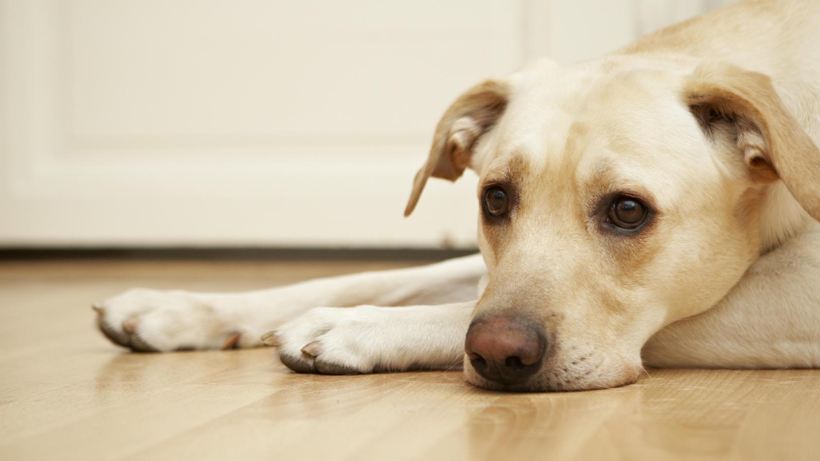 Dogsharing - das kann für Hunde zur Belastung werden.