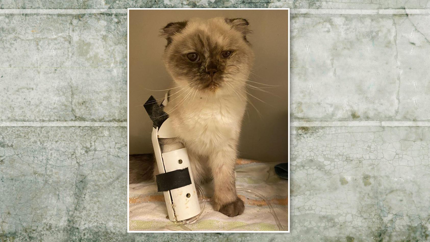 Diese süße Katze wurde in einem Keller gefunden und lebt nun vorerst im Tierheim Köln-Dellbrück.