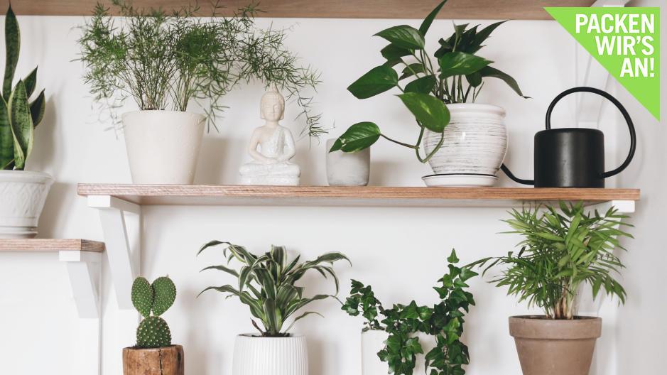 wir-stellen-dekorative-zimmerpflanzen-vor-die-wenig-wasser-brauchen
