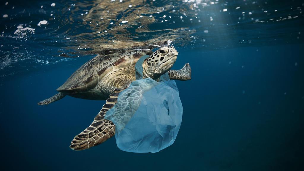 Plastiktüten sind eine Gefahr für Meeresschilkröten