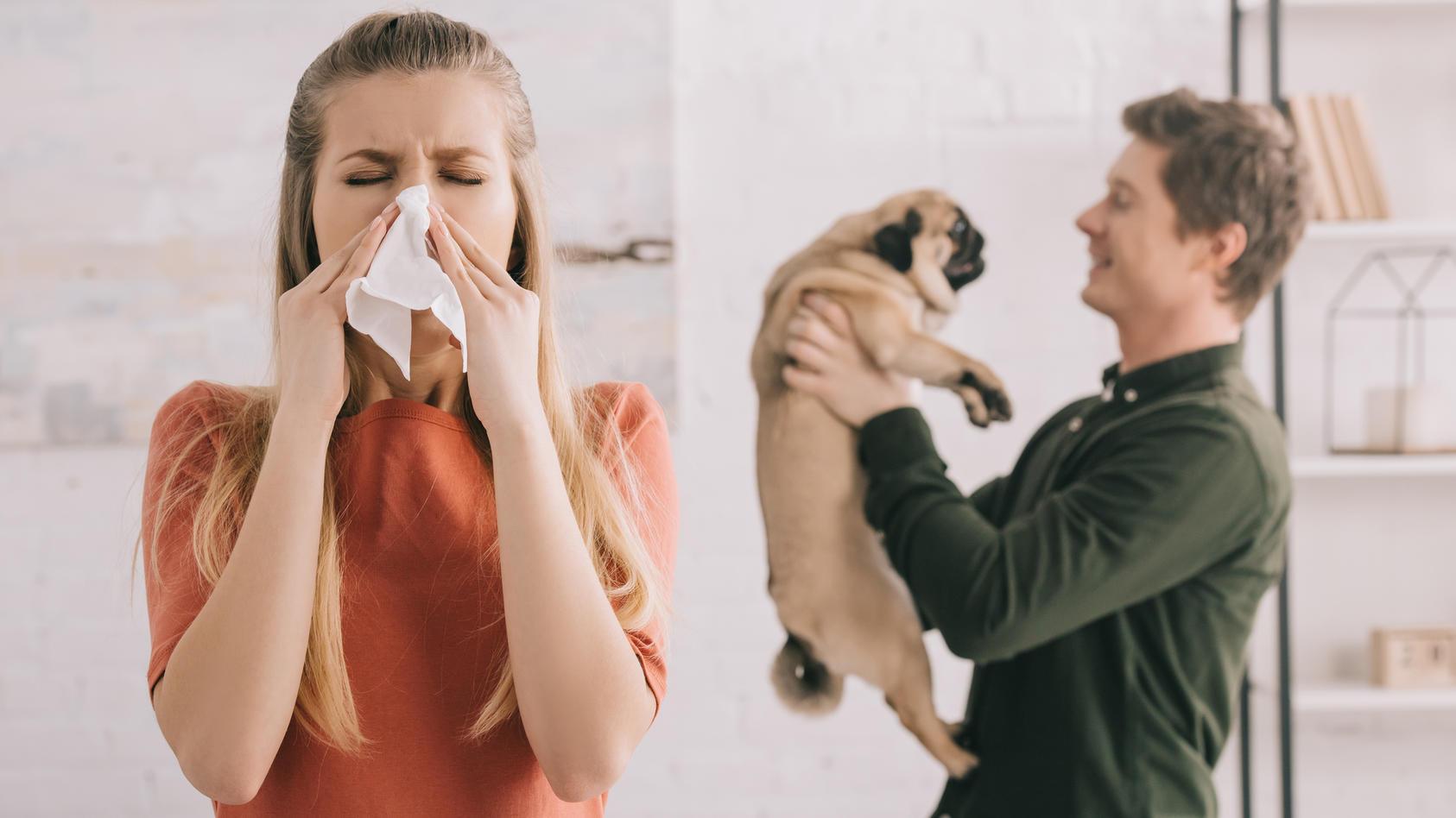 Hundeallergie? Diese Rassen sind für Allergiker geeignet.