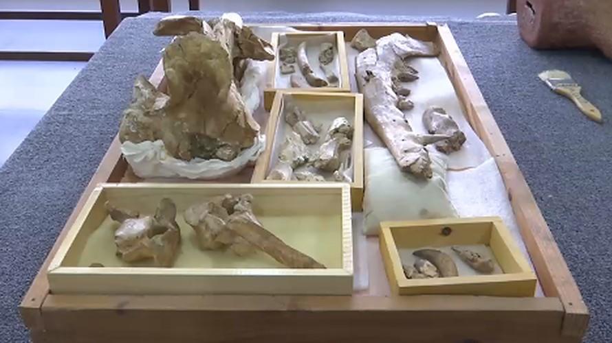 Forscher aus Ägypten entdecken ein Wal-Fossil mit vier Beinen.