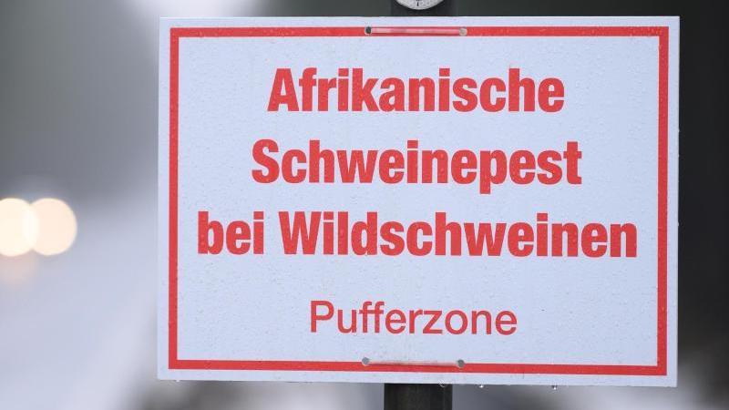 """Ein Schild mit der Aufschrift """"Afrikanische Schweinepest bei Wildschweinen, Pufferzone"""". Foto: Sebastian Kahnert/dpa-Zentralbild/dpa/Archivbild"""