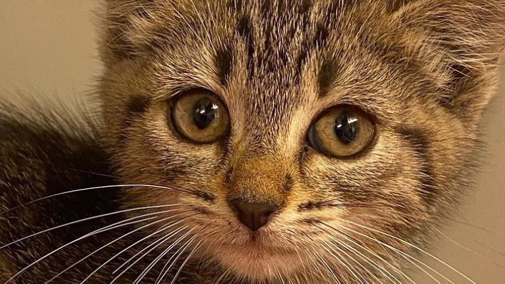 """Das kleine Kätzchen """"Trolli"""" hat es seinen Rettern nicht einfach gemacht und muss sich jetzt von der Aufregung erholen."""