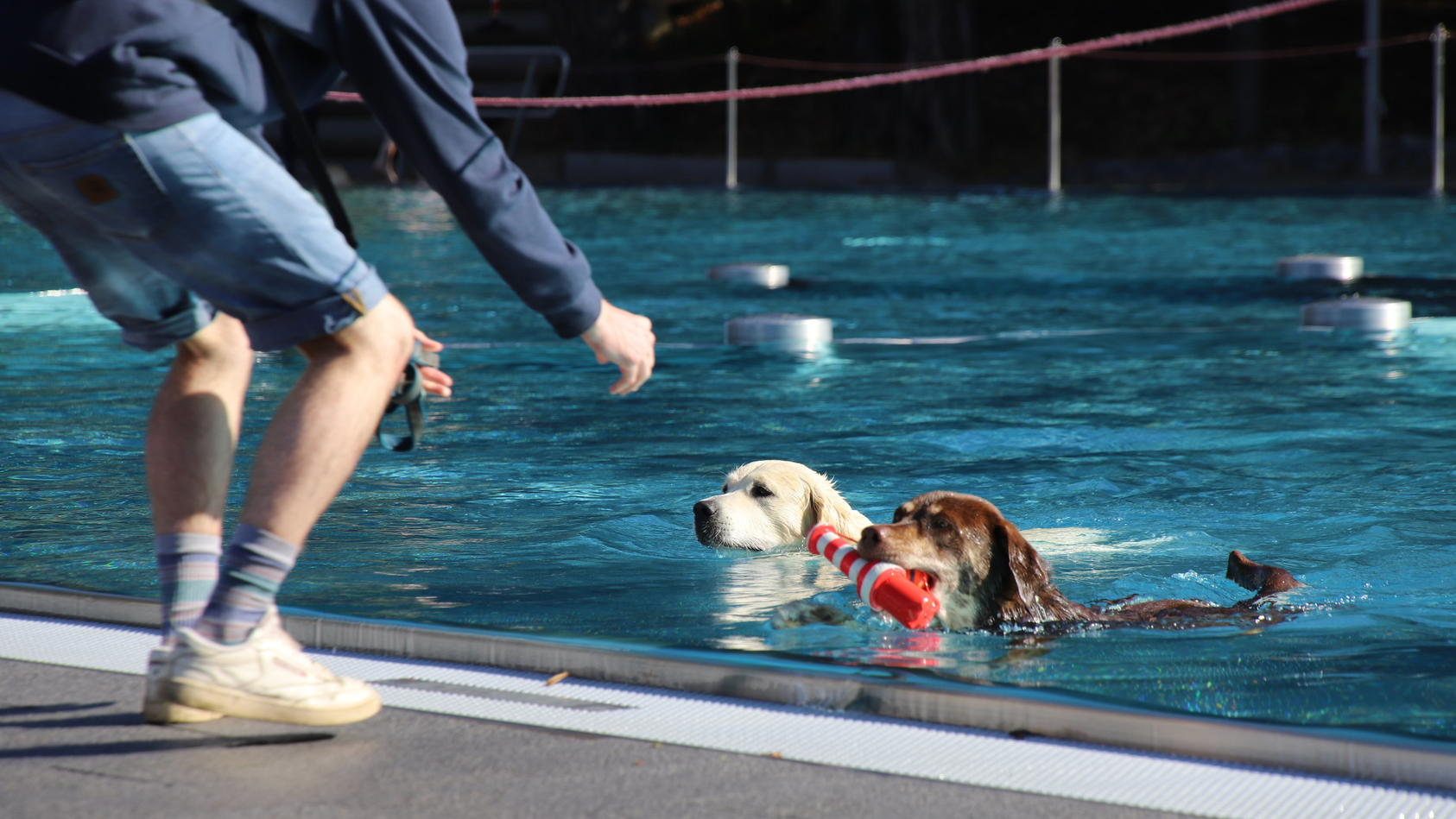 700 Hunde baden in Kölner Freibad zum Saisonende
