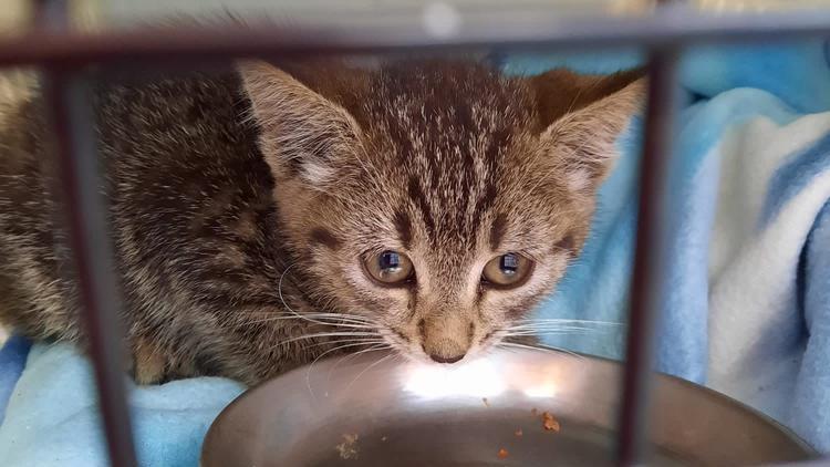Das kleine Kätzchen steckte unter einem Auto fest.