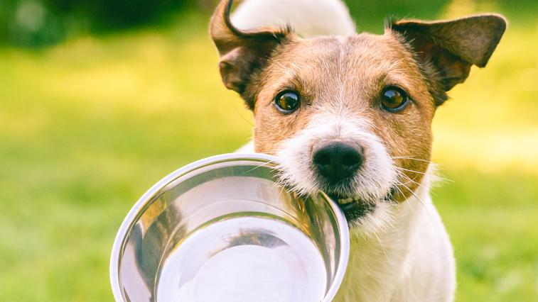 Die Faustregel: Je größer der Hund, desto mehr Wasser braucht er