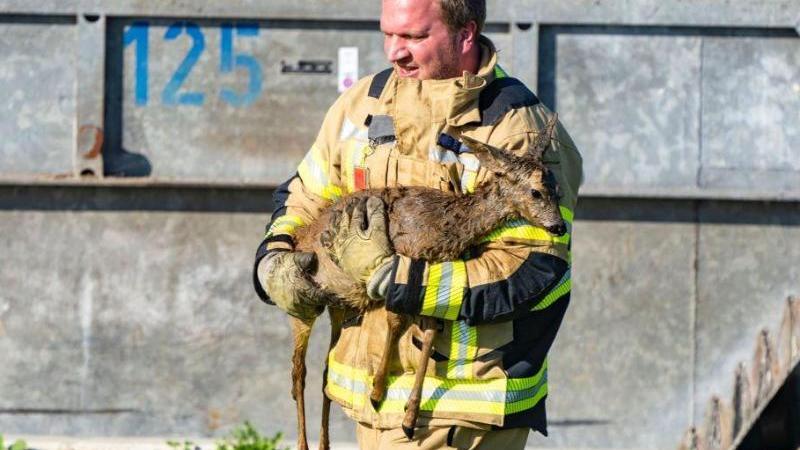 Ein Feuerwehrmann trägt ein gerettetes Reh. Foto: -/Feuerwehr Xanten/dpa