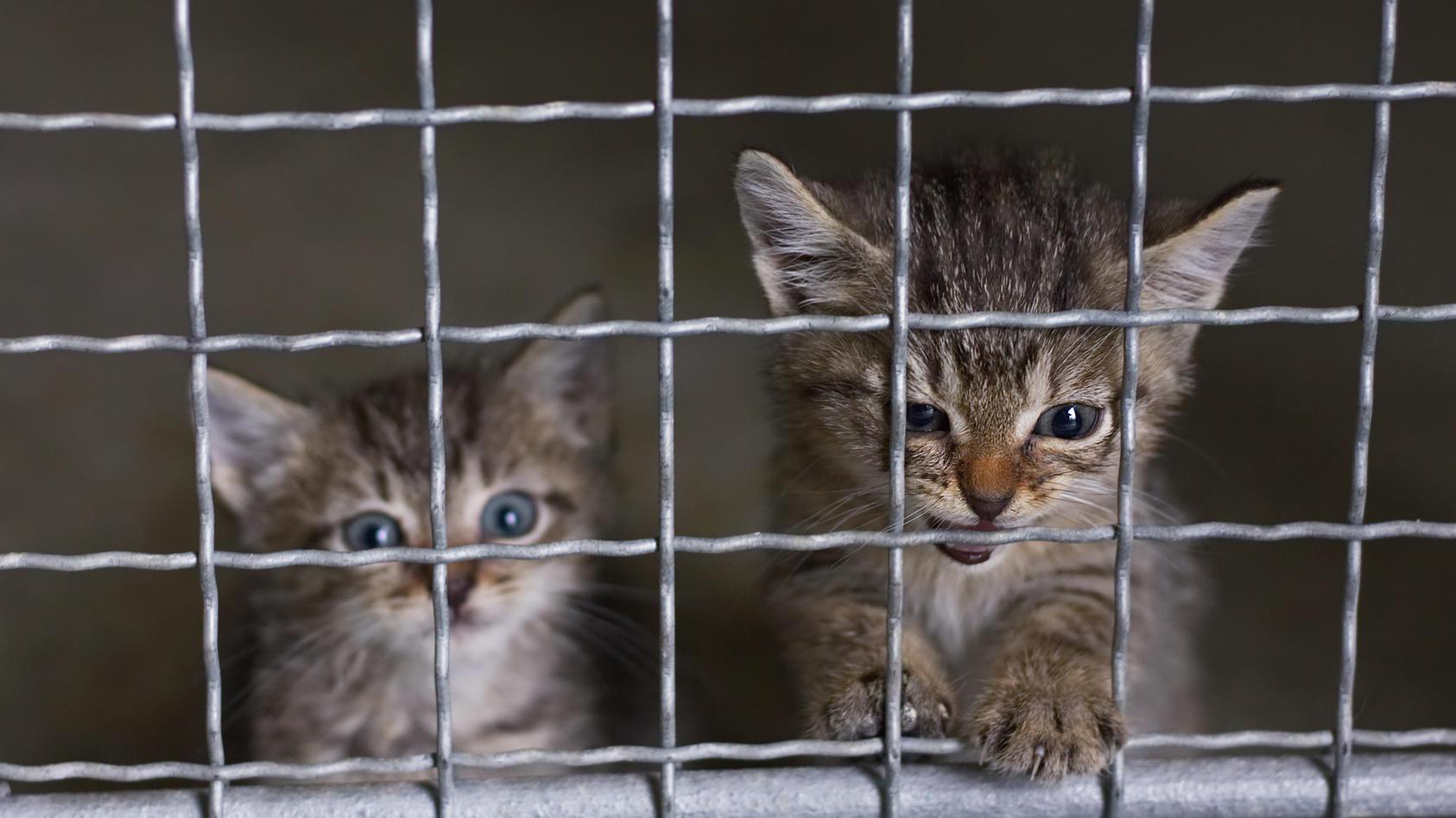 Ein Tierheim in Sachsen-Anhalt hat vier Kätzchen aufgenommen, nachdem sie einfach über den Zaun geworfen wurden. (Symbolbild)