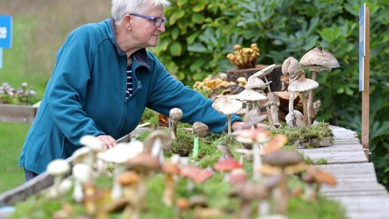 Veronika Weisheit bereitet imBotanischenGarten die große Landes-Pilzschau mit vor. Foto: Bernd Wüstneck/dpa-Zentralbild/dpa
