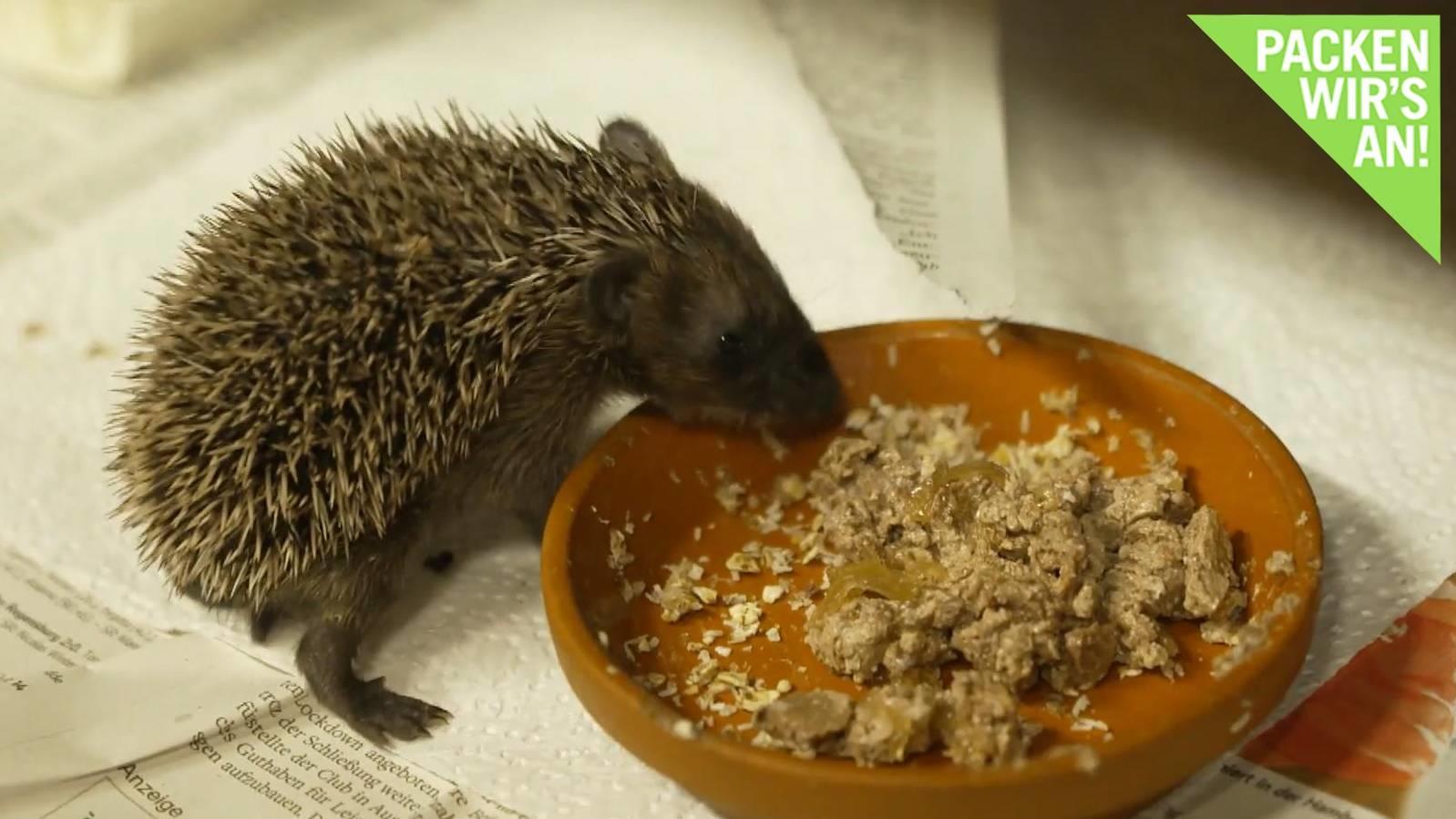 heimische-tiere-sterben-aus-was-jeder-tun-kann-um-zu-helfen
