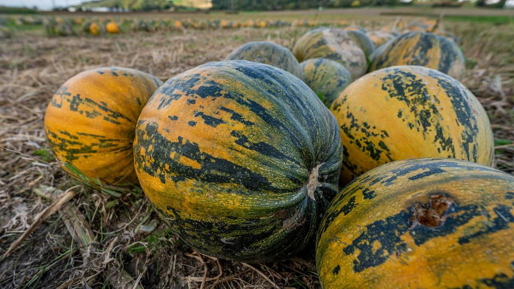 Woher kommt das orangene Herbstgemüse eigentlich?