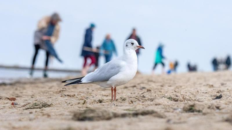 Während diese Möwe in Cuxhaven wohl kein Zimmer sucht, wird es für die Urlauber langsam eng.