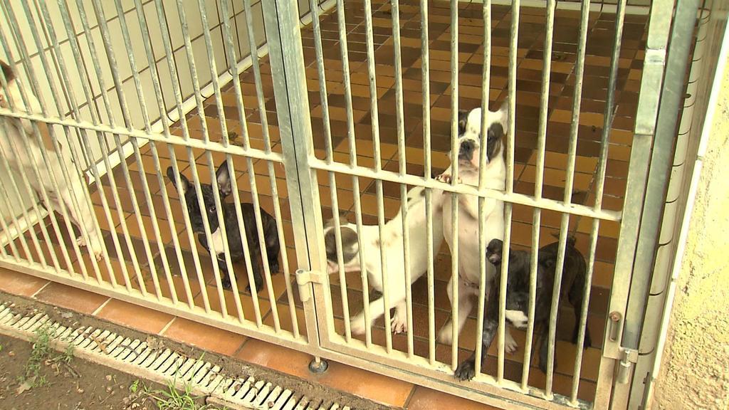 Sie sollten illegal verkauft werden, dabei waren sie noch viel zu jung. Fünf kleine Bulldoggen-Welpen sind aktuell im Tierheim Darmstadt in Quarantäne.