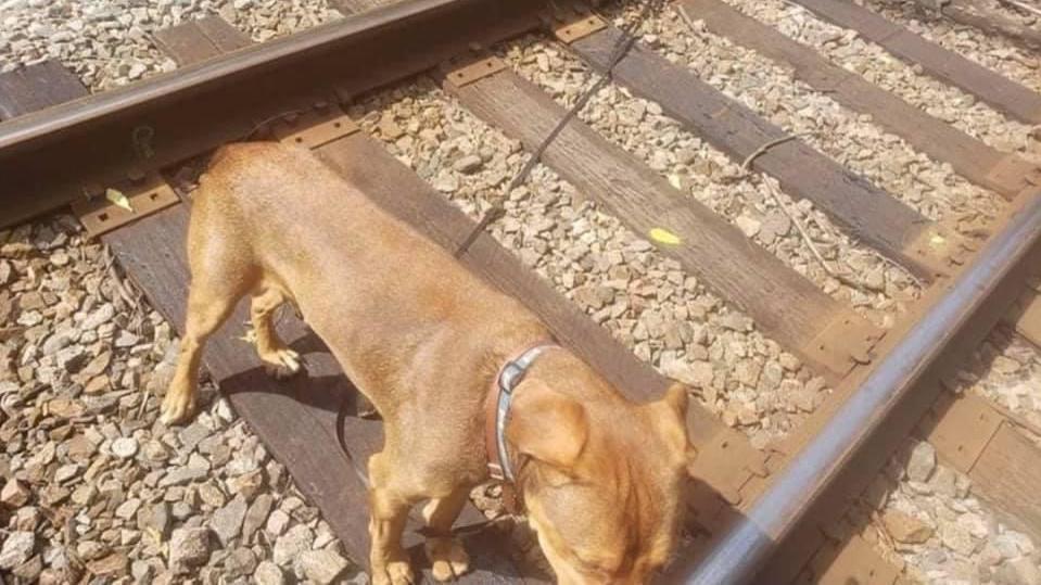 Dieser arme Hund in den USA konnte in letzter Sekunde vor dem Tod bewahrt werden.