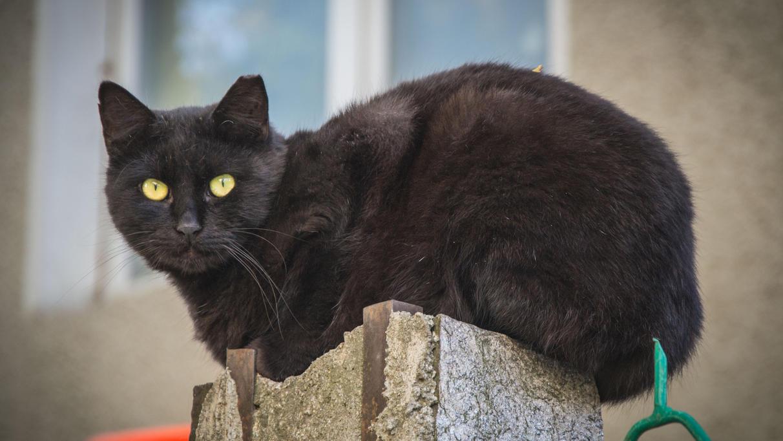schwarze-katzen-co-warum-aberglaube-gut-fur-uns-ist