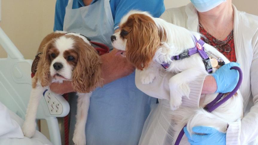 """Spezieller Besuch im Hospiz: Die """"King Charles Spaniels"""" Monty und Rowley."""