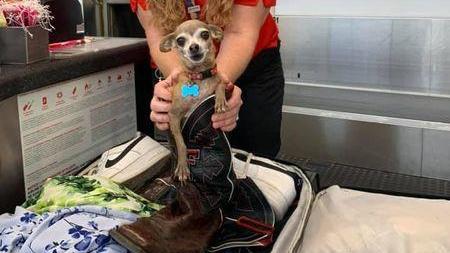 Hund und Besitzerin am Flughafen