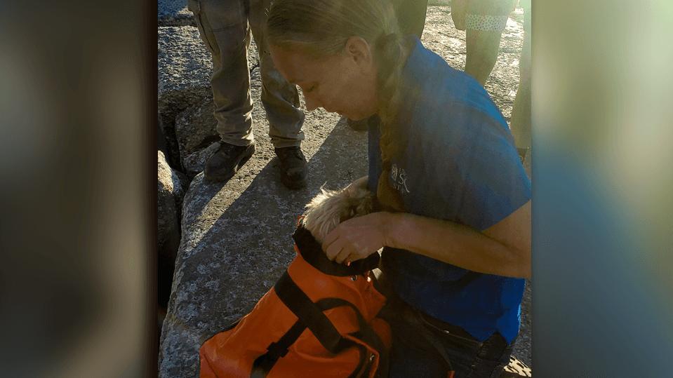 Hündin Liza konnte aus einer Felsspalte gerettet werden.