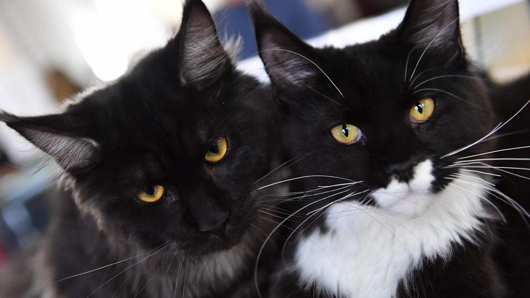 """Eine Katze war schuld. Die Frage """"welche"""" führte zum Streit (Symbolbild)."""
