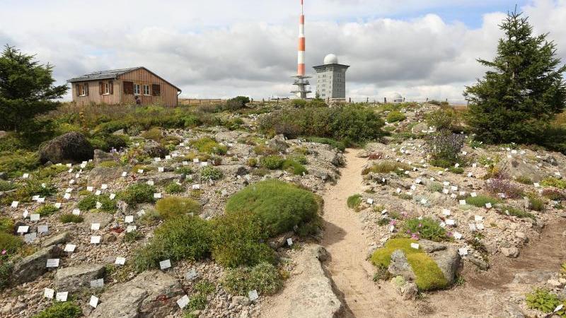 blick-in-den-brockengarten-foto-matthias-beindpa-zentralbilddpaarchivbild