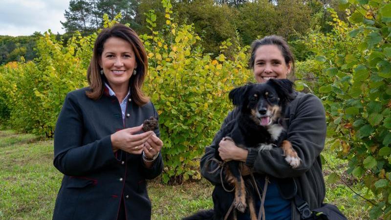 bayerns-landwirtschaftsministerin-michaela-kaniber-halt-einen-truffel-in-der-hand-foto-judith-schmidhuberstmelfdpaarchivbild