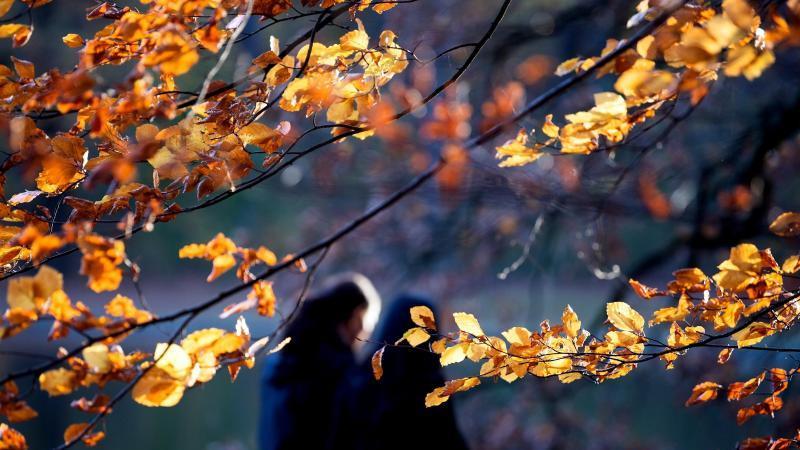 gelb-leuchtet-das-herbstlaub-foto-federico-gambarinidpaarchivbild
