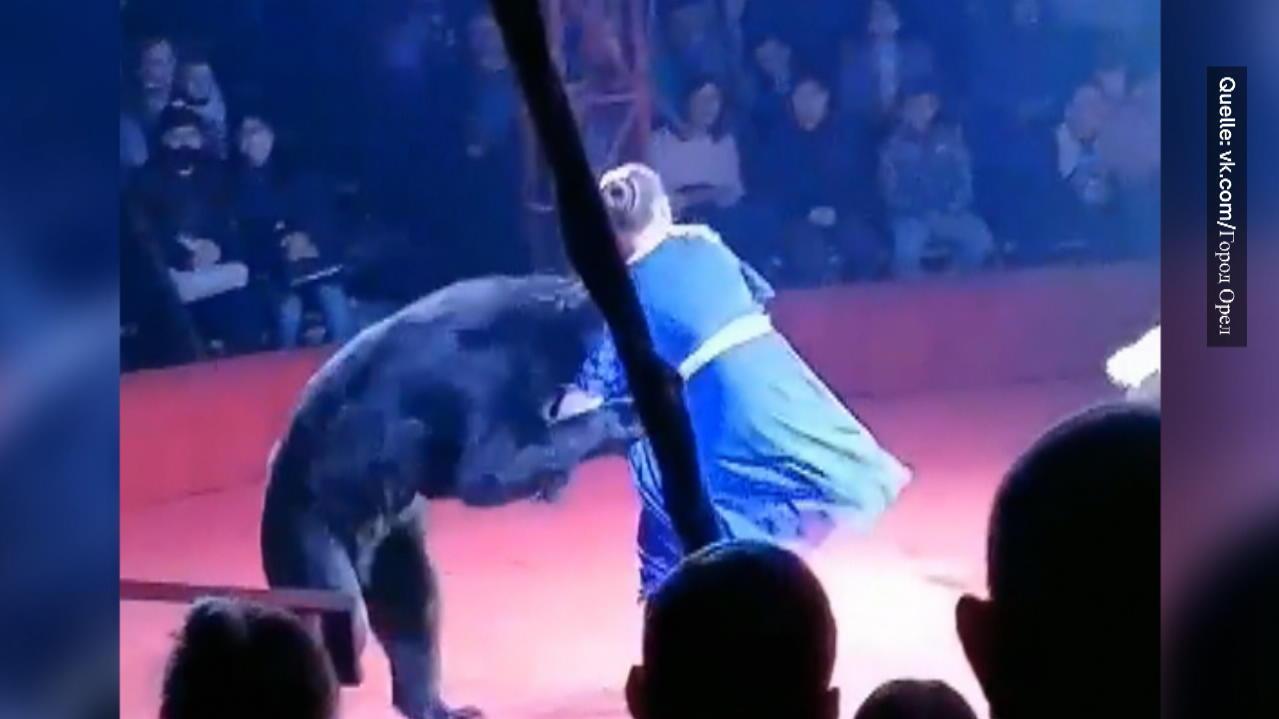 bar-greift-zirkus-trainerin-an-schwangere-dompteurin-verletzt