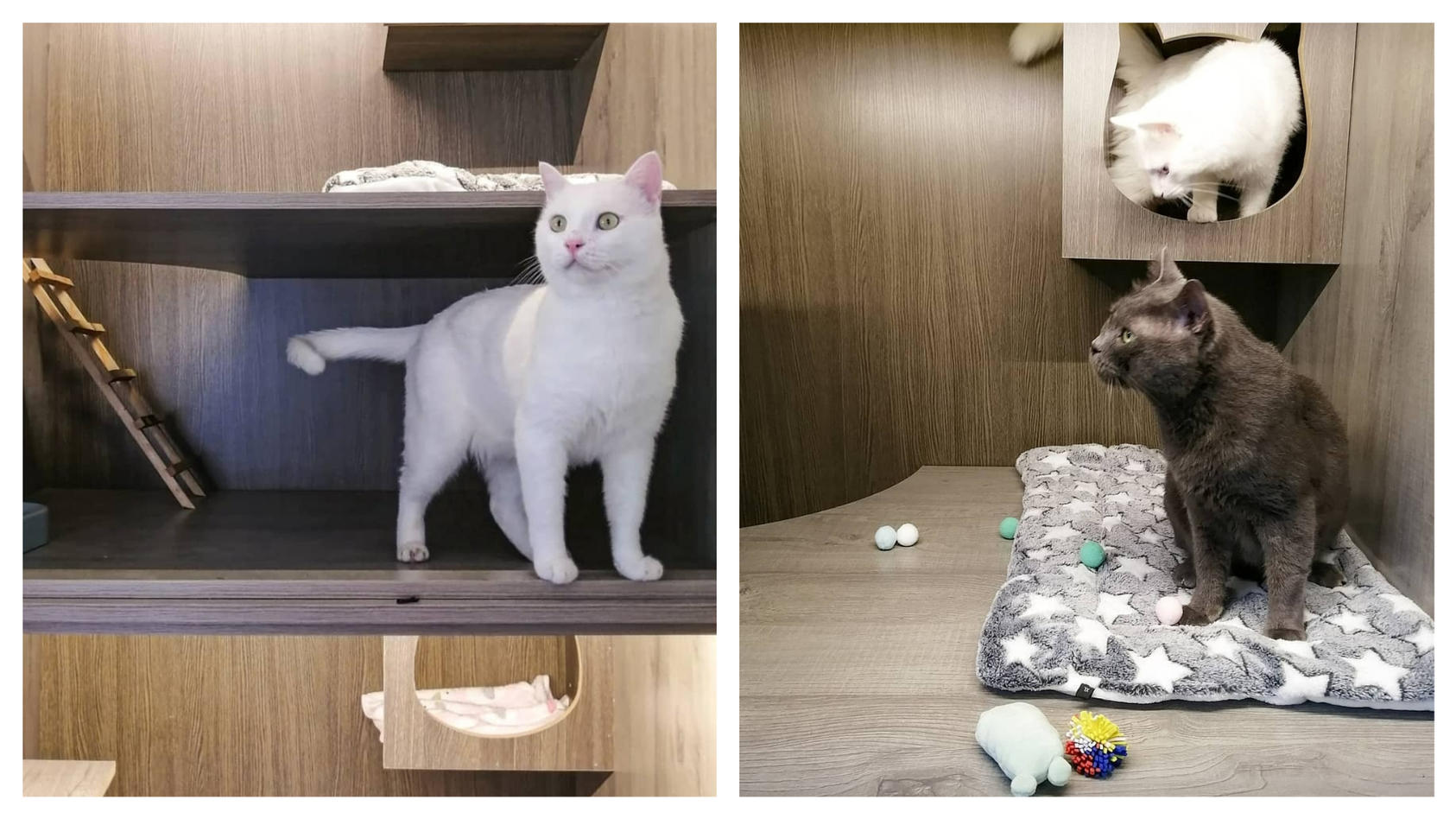 im-jordanischen-katzenhotel-mau-finden-streuner-endlich-wieder-ein-zuhause