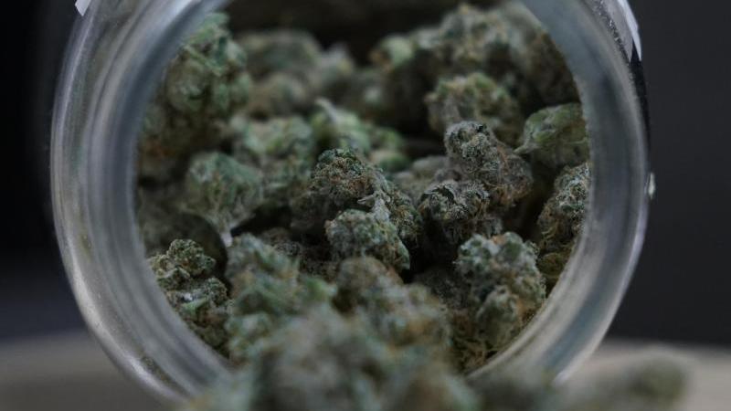 marihuana-knospen-liegen-in-einem-glas-foto-paul-sancyaapdpasymbolbild