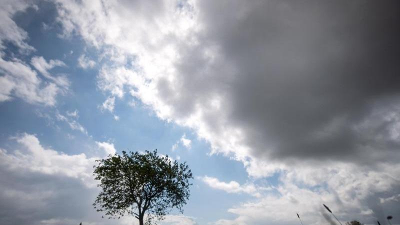 dunkle-wolken-ziehen-am-himmel-uber-einen-baum-hinweg-foto-sina-schuldtdpasymbolbild