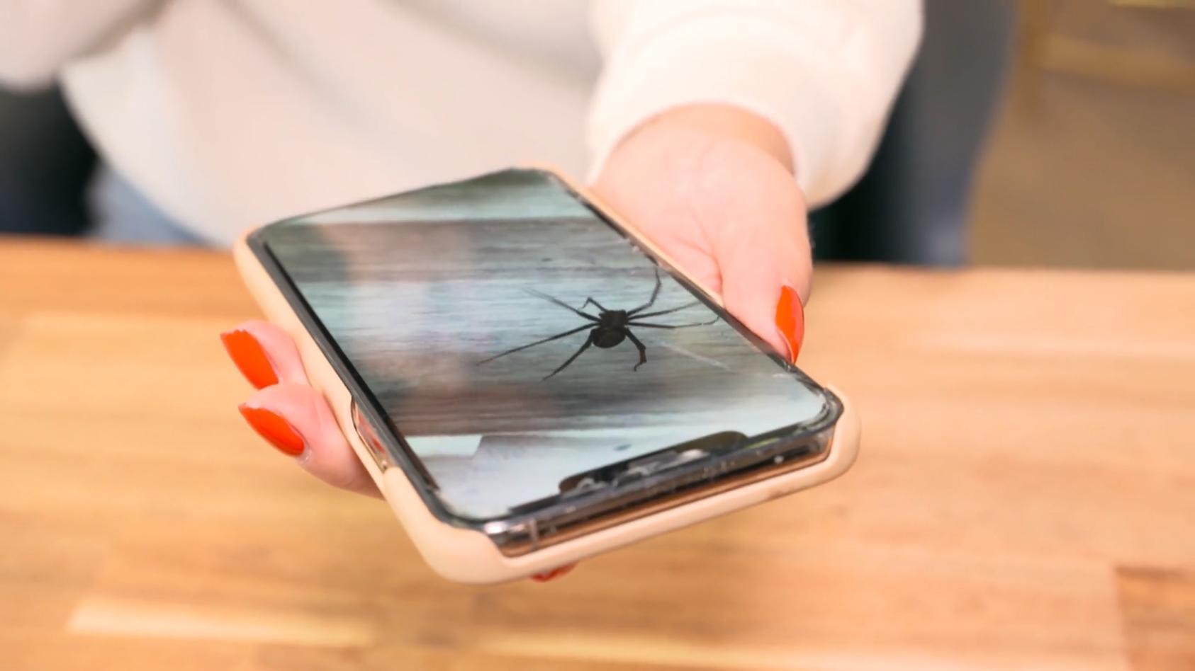 funktioniert-das-wirklich-app-soll-angst-vor-spinnen-nehmen