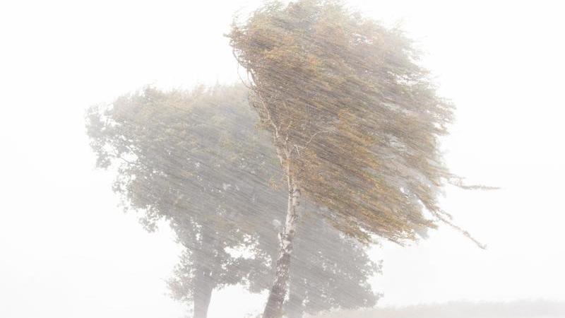 starkregen-hagel-und-starke-sturmboen-ziehen-wahrend-des-sturmtiefs-ignatz-uber-einen-feld-mit-birken-in-der-region-hannover-hinweg-foto-julian-stratenschultedpa