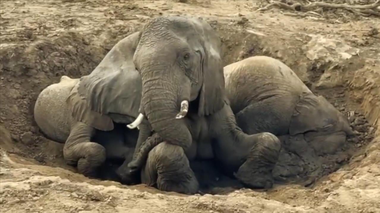 tierschutzer-retten-elefanten-brunnen-wird-fast-zur-todesfalle