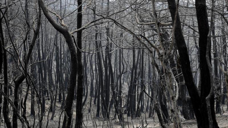 verbrannte-und-verkohlte-baume-im-september-und-oktober-2020-soll-es-zu-fast-190-branden-gekommen-sein-foto-hussein-mallaapdpasymbolbild