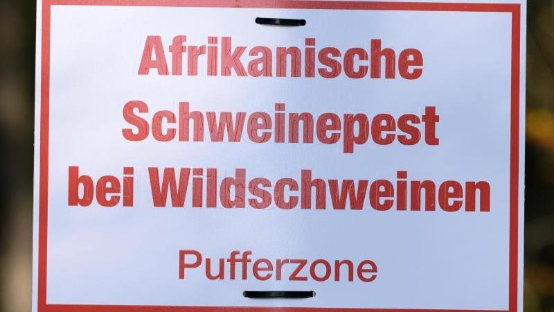 ein-schild-mit-der-aufschrift-afrikanische-schweinepest-bei-wildschweinen-an-einem-verkehrsschild-foto-sebastian-kahnertdpa-zentralbildzbarchivbild