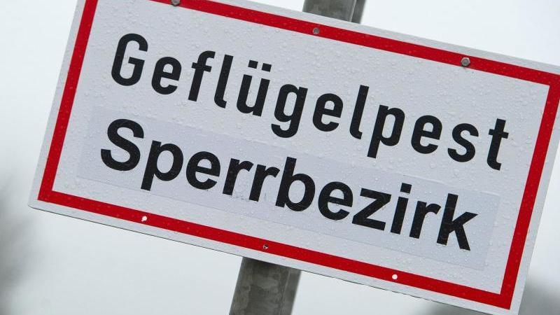ein-schild-mit-der-aufschrift-geflugelpest-sperrbezirk-hangt-auf-einer-strae-foto-stefan-sauerdpa-zentralbilddpaarchivbild